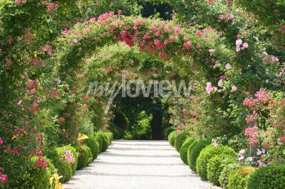 Wall mural Rose Arch In the Garden
