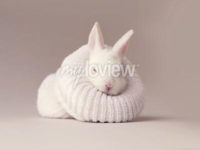 Canvas print Bunny in a sock