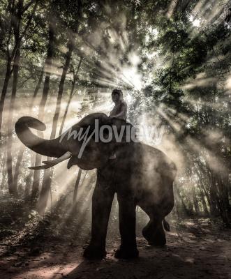 Canvas print Mahout at Surin Province Thailand elephant