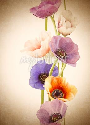 Wall mural Fresh colorful poppy flowers