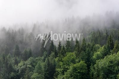 Wall mural Evergreen Forest Overview