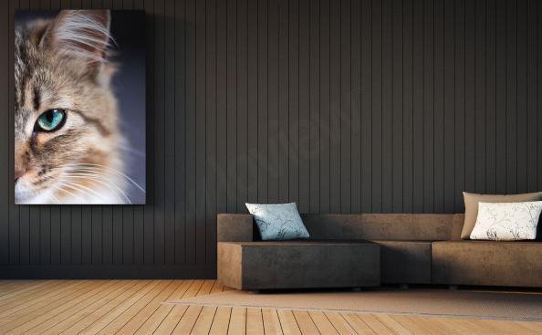 Image oeil de chat