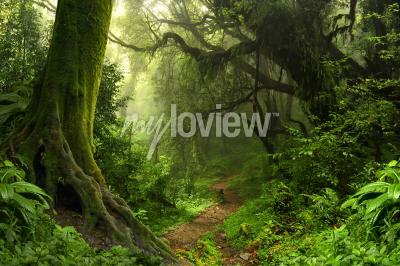 Wall mural Tropical rain forest