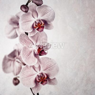 Wall mural  A delicate pink orchid on faded vintage style background