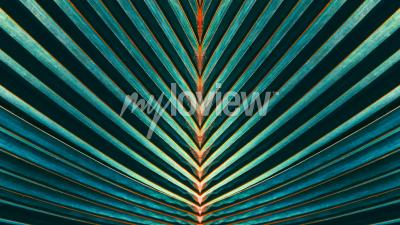 Wall mural Striped of palm leaf