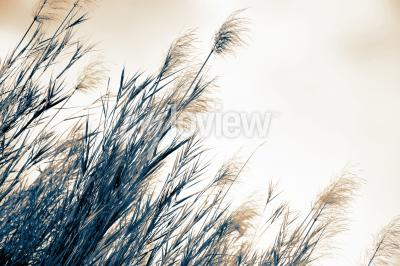 Wall mural Grass soft focus blurred background in vintage style