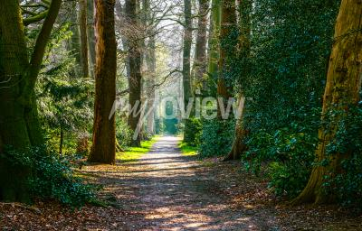 Wall mural Forest road landscape