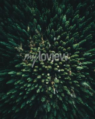Wall mural Forest of tree pines aerial view