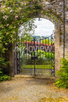 Wall mural Beautiful old garden gate covered with green ivy