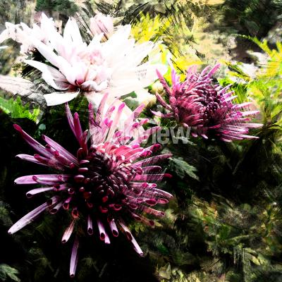 Wall mural Stylized bouquet of chrysanthemums on grunge striped and stained background