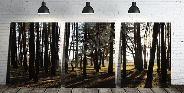 3-piece canvas print of trees