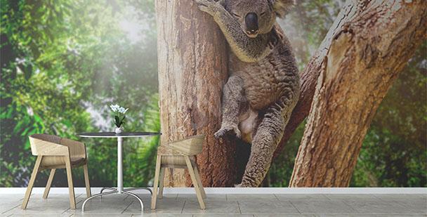 Australia koala wall mural
