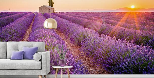 Blooming lavender mural