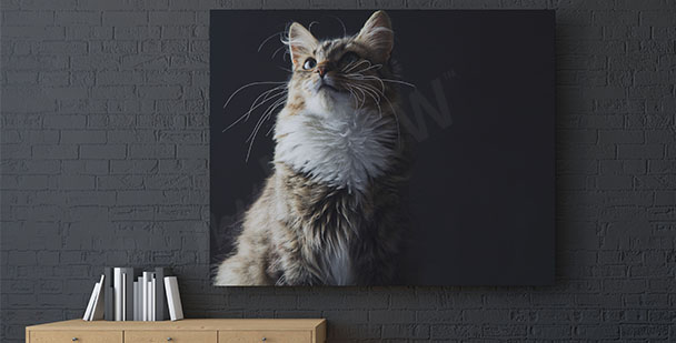 Cat canvas print for living room