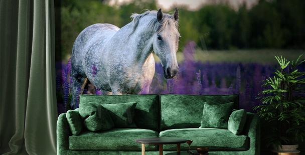 Horse in a lavender field mural