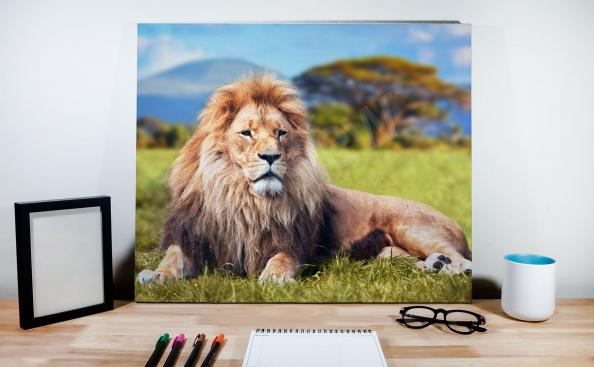 Landscape with a male lion canvas print