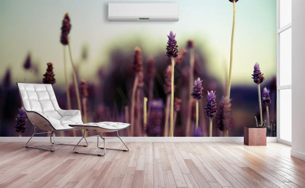 Lavender field mural