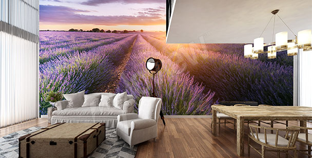 Lavender in Provence wall mural