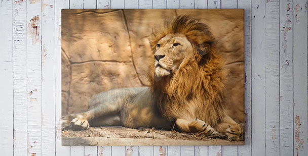 Lion canvas print for the living room