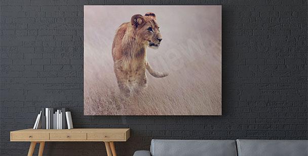 Lioness in the grass canvas print