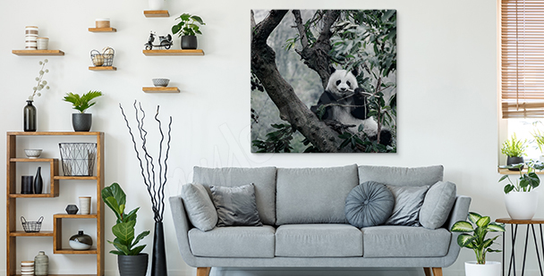 Panda in bushes canvas print