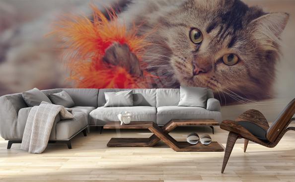 Wallpaper with cat